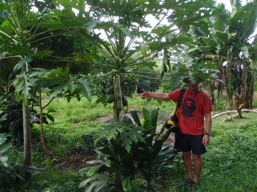 Apr '09 - Nuku Hiva - Daniel's Bay - Wayne & a papaya tree - click to enlarge