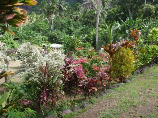 Apr '09 - Nuku Hiva - Daniel's Bay - Village landscaping - click to enlarge
