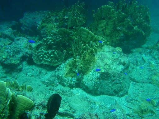 Apr '09 - Tahuata - Reef fish & coral formations - click to enlarge