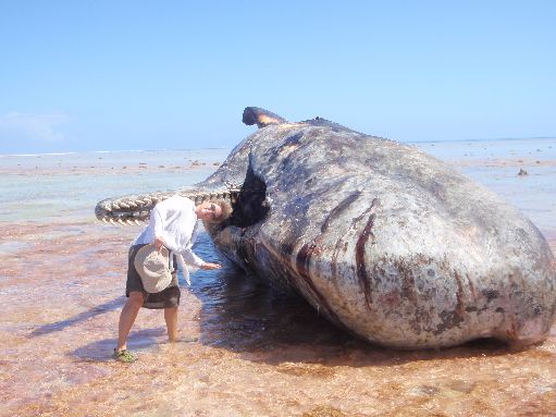 Aug '09 - Susan & dead sperm whale on the reef - click to enlarge