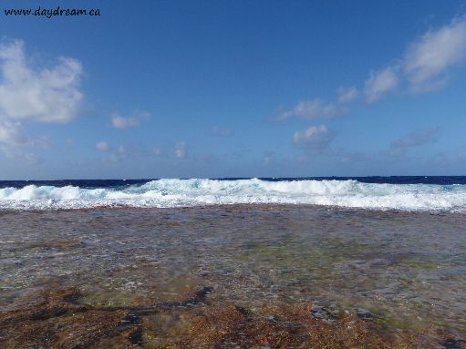 Jul '09 - Standing on the ringing reef; a few feet away it drops to great depths - click to enlarge