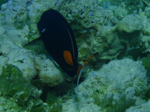Jul '09 - Achilles Tang - click to enlarge