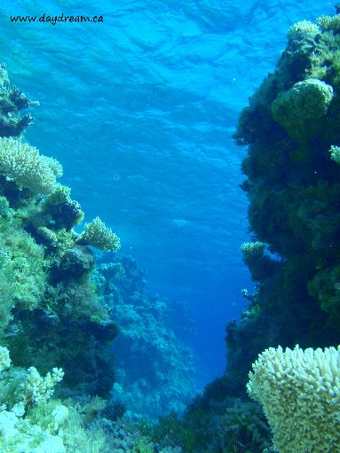 Jun '09 - Seven Islands - Coral formations - click to enlarge