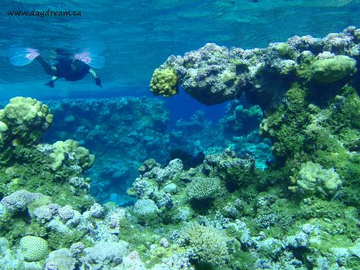 Jul '09 - Seven Islands - Snorkeling in the fantastic coral formations - click to enlarge
