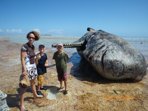 Jun '09 - Mary, Finn & Timothy with the dead sperm whale - click to enlarge