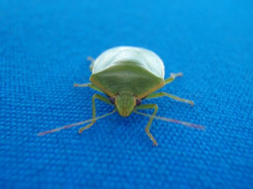 Sep '09 - Very cool bug - click to enlarge