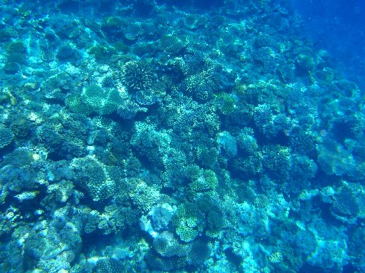 Sep '09 - Coral Garden - click to enlarge
