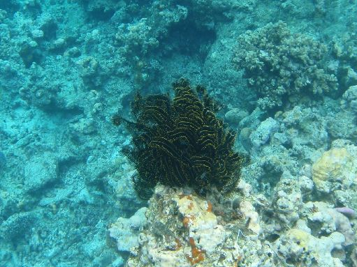 Sep '09 - Soft coral - click to enlarge