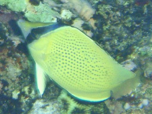 Sep '09 - Reef fish - click to enlarge