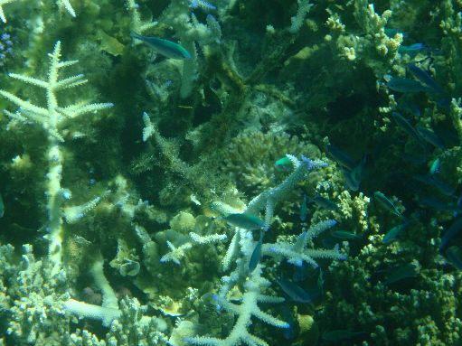 Sep '09 - Coral formations - click to enlarge