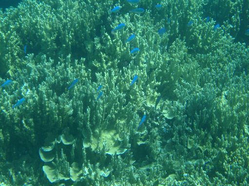 Sep '09 - Coral & reef fish - click to enlarge