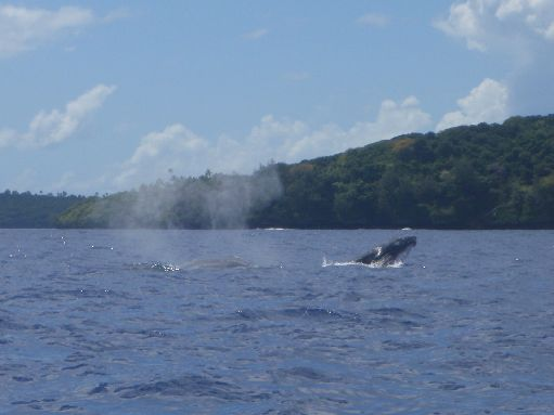 Oct '09 - Momma & calf humpback - click to enlarge