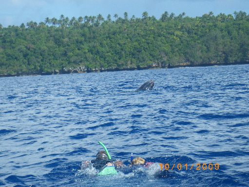 Oct '09 - Snorkeing towards the whales - click to enlarge